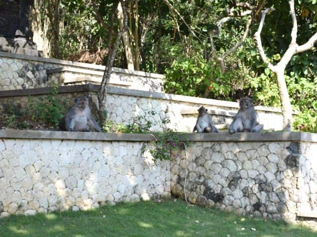 Daytrips in Bali Uluwatu Monkeys